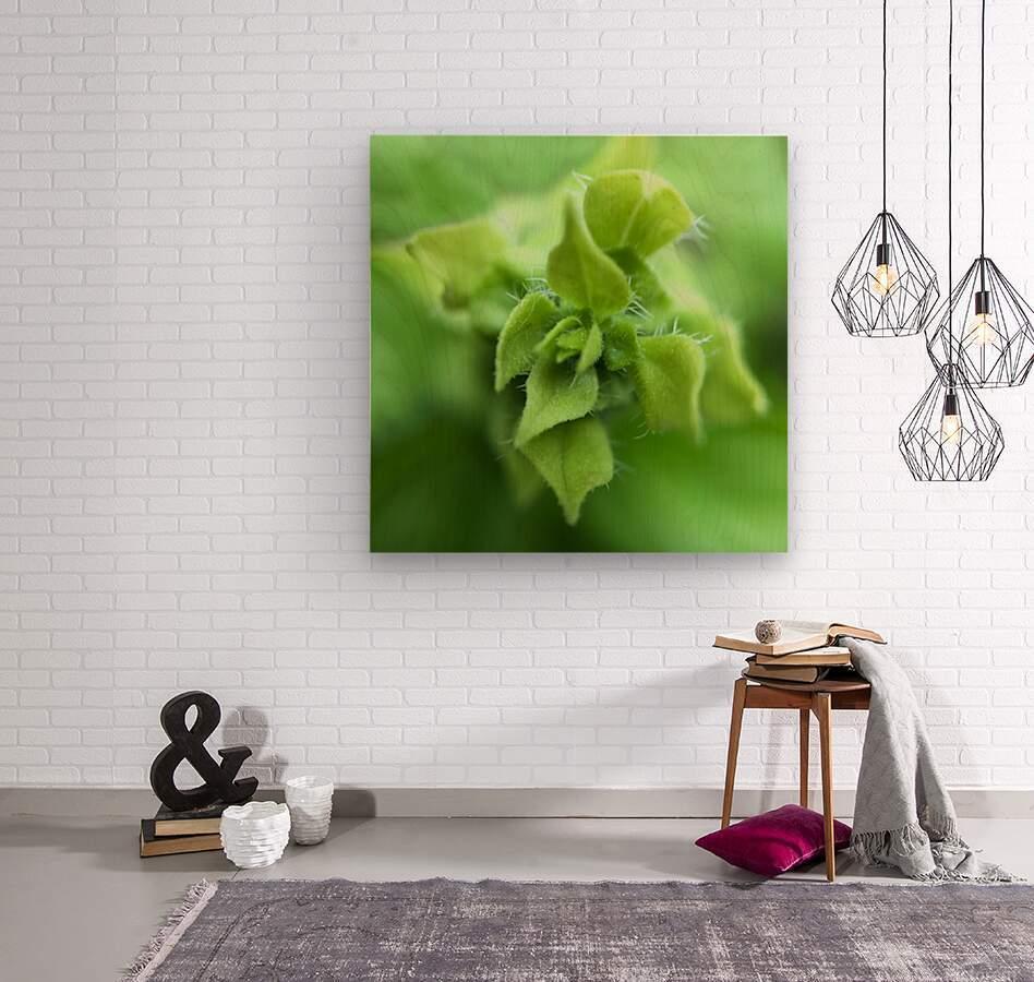 24_Green_Plant_6772_SQUARE  Wood print