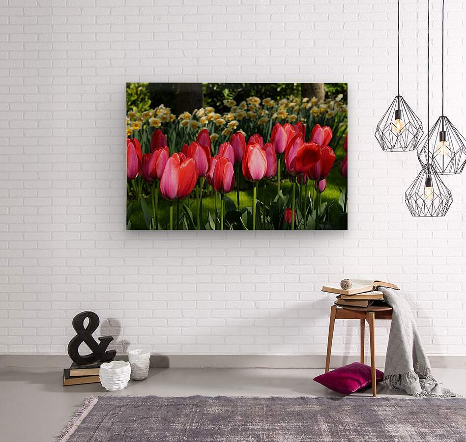 Tulips of the Netherlands 4 of 7  Wood print