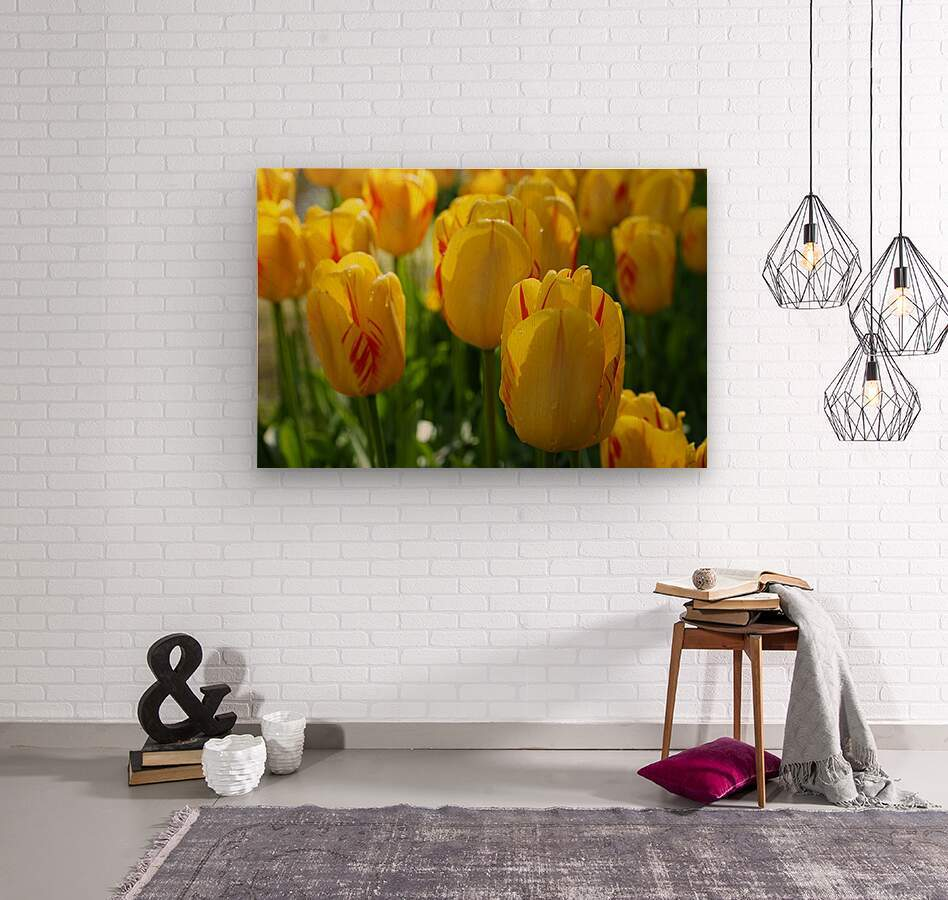 Spring Blooms of Holland 1 of 8  Wood print