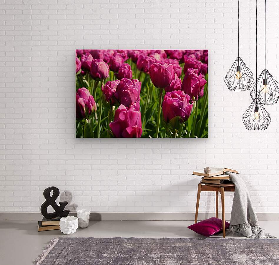 Tulips of the Netherlands 7 of 7  Wood print