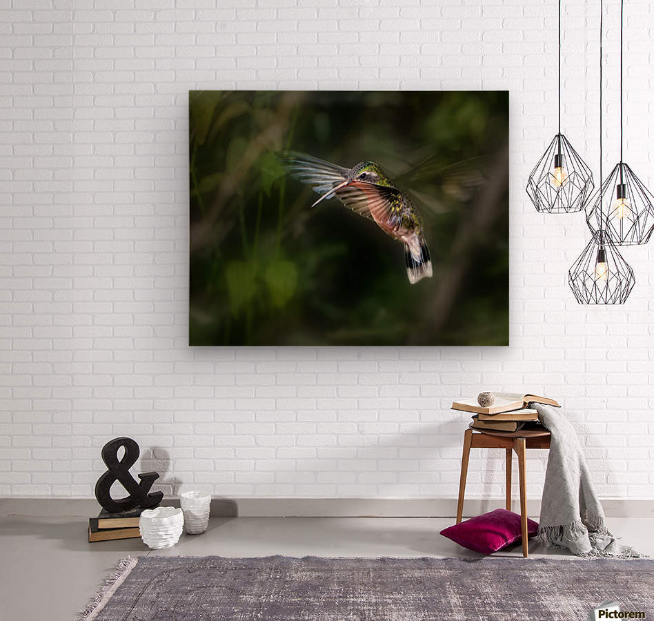 Hummingbird 1B by Leigh Pelton   Wood print