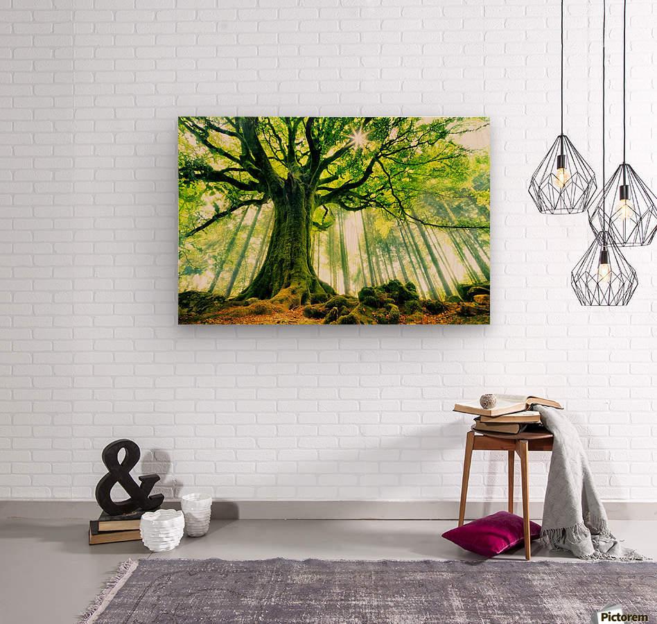 Ponthus Beech by Christophe Kiciak   Wood print