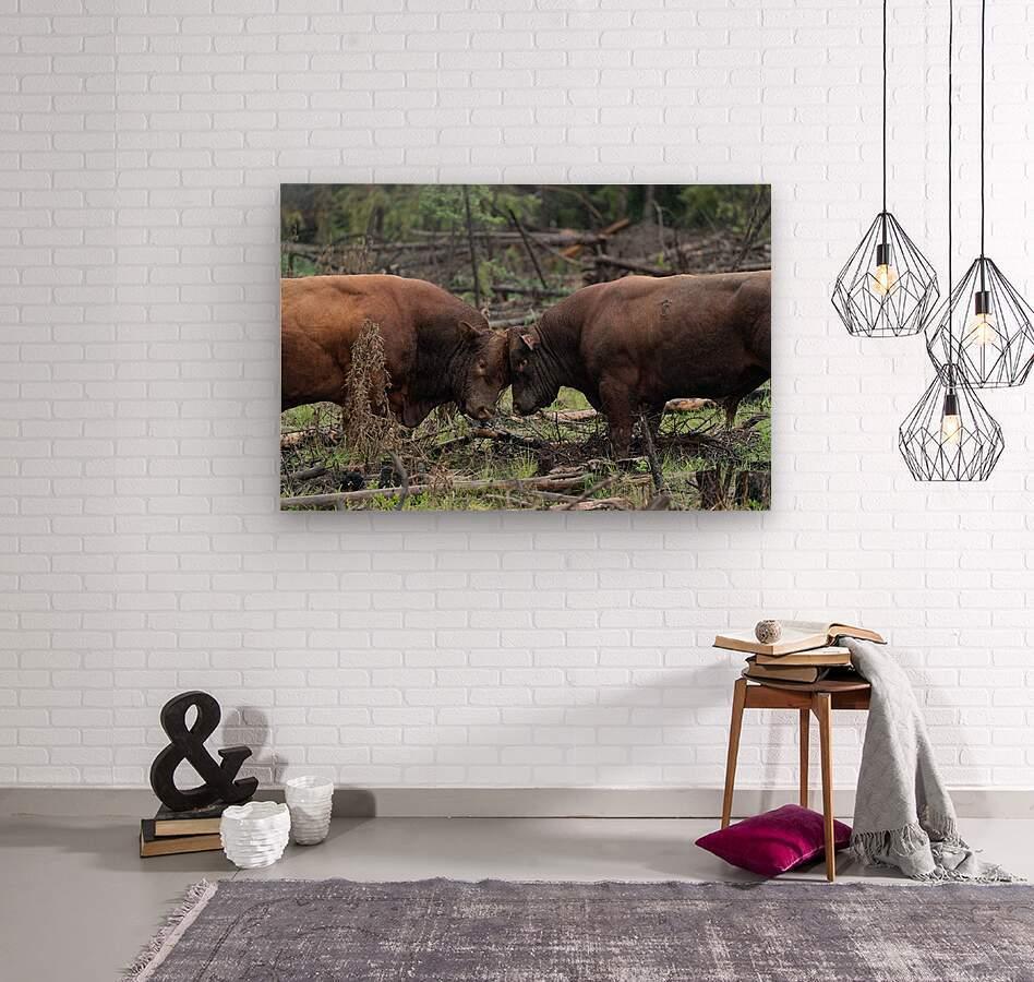 Bulls  Wood print