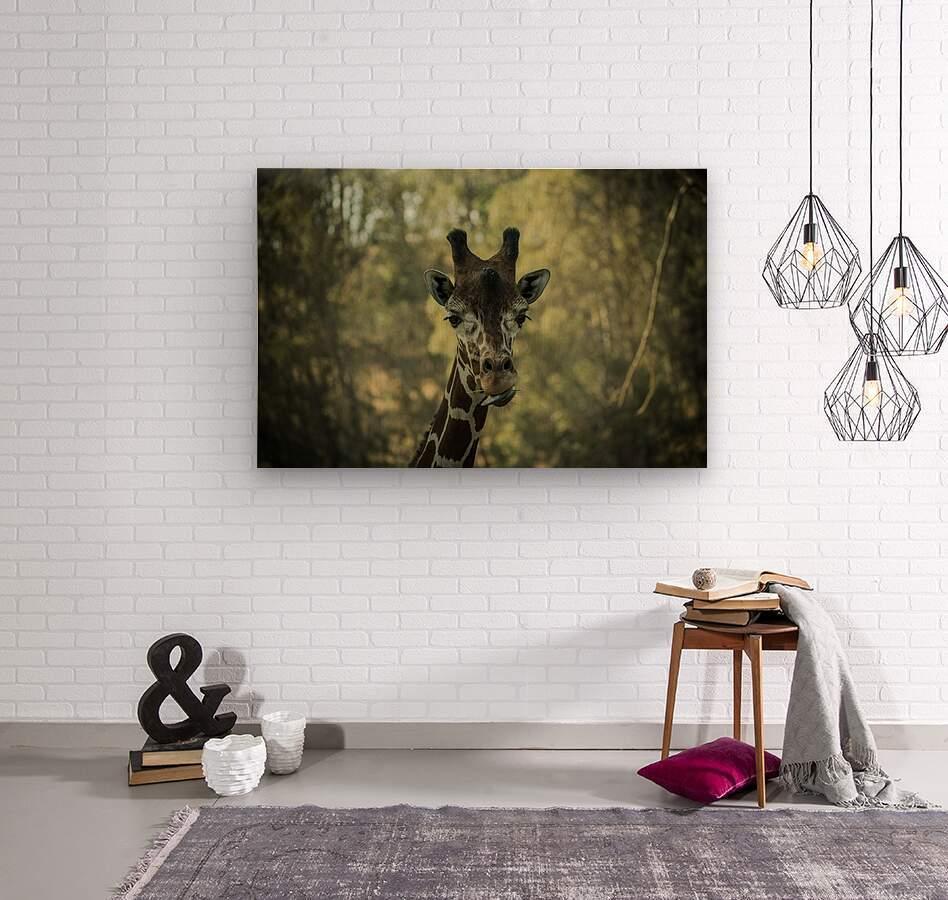 20181104 DSC 0164  3   Wood print