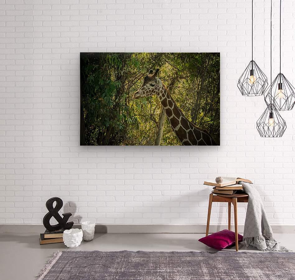 20181104 DSC 0202  3   Wood print
