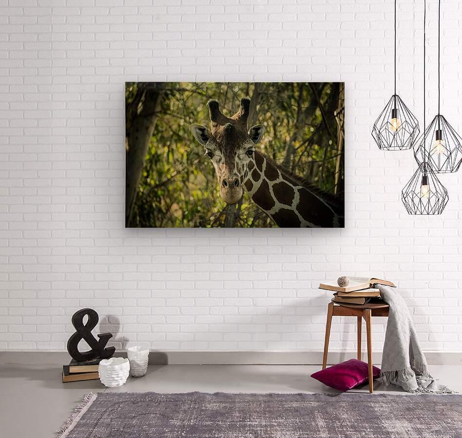 20181104 DSC 0191  3   Wood print