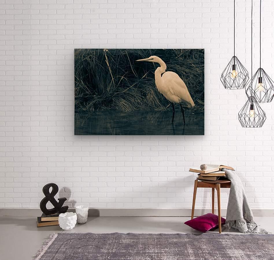 Great White Egret ap 1839 B&W  Wood print