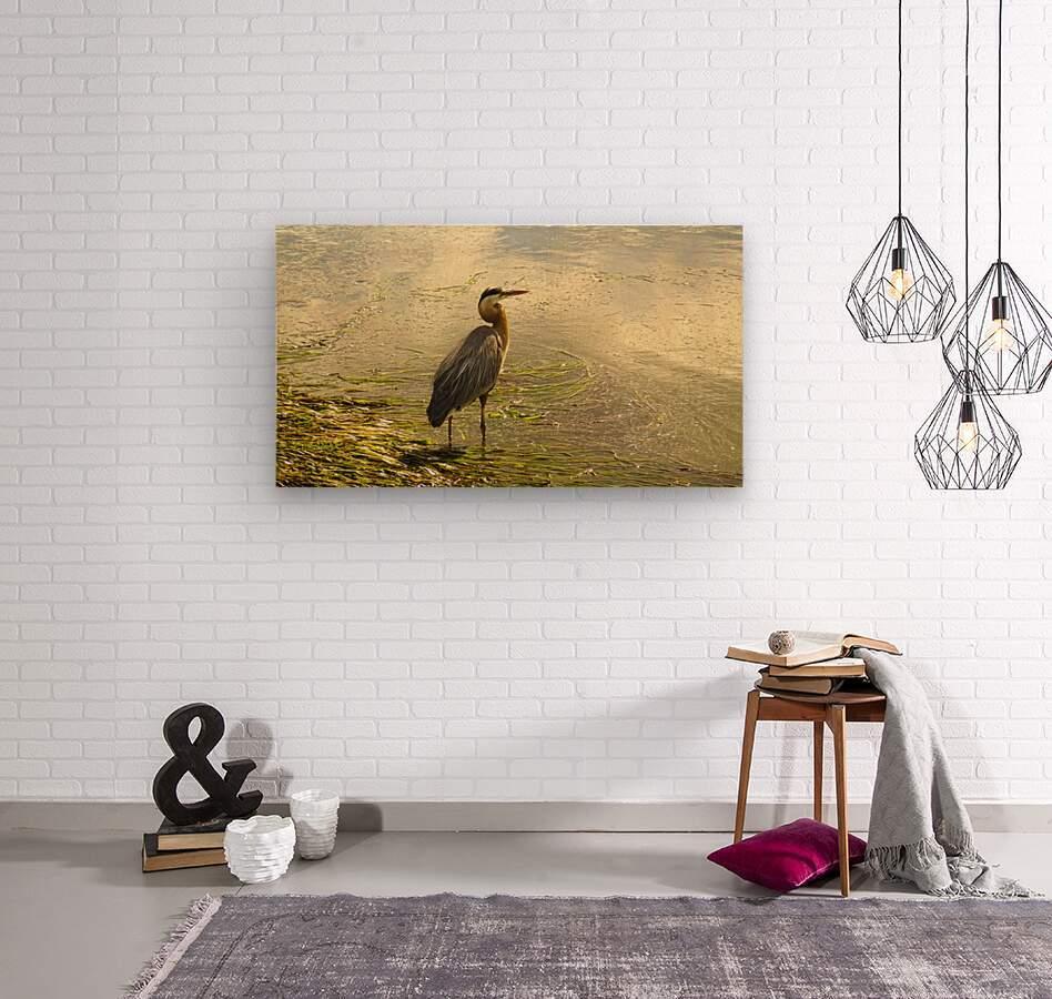 Blue Heron At the Estuary  Wood print