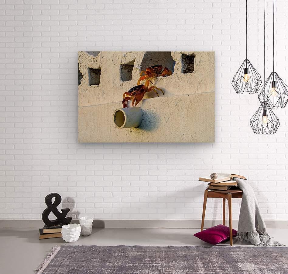 Cayman Crabs  Wood print