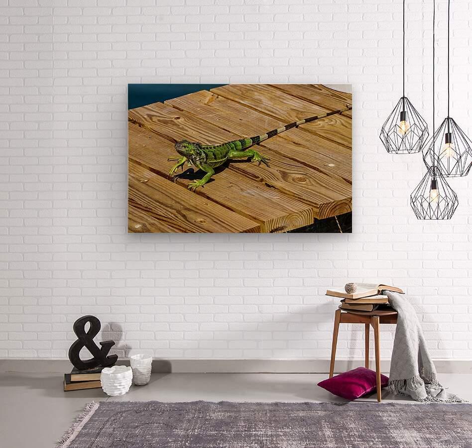 Cayman Green Iguana On Alert  Wood print
