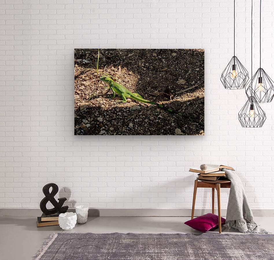 Cayman Young Green Iguana   Wood print