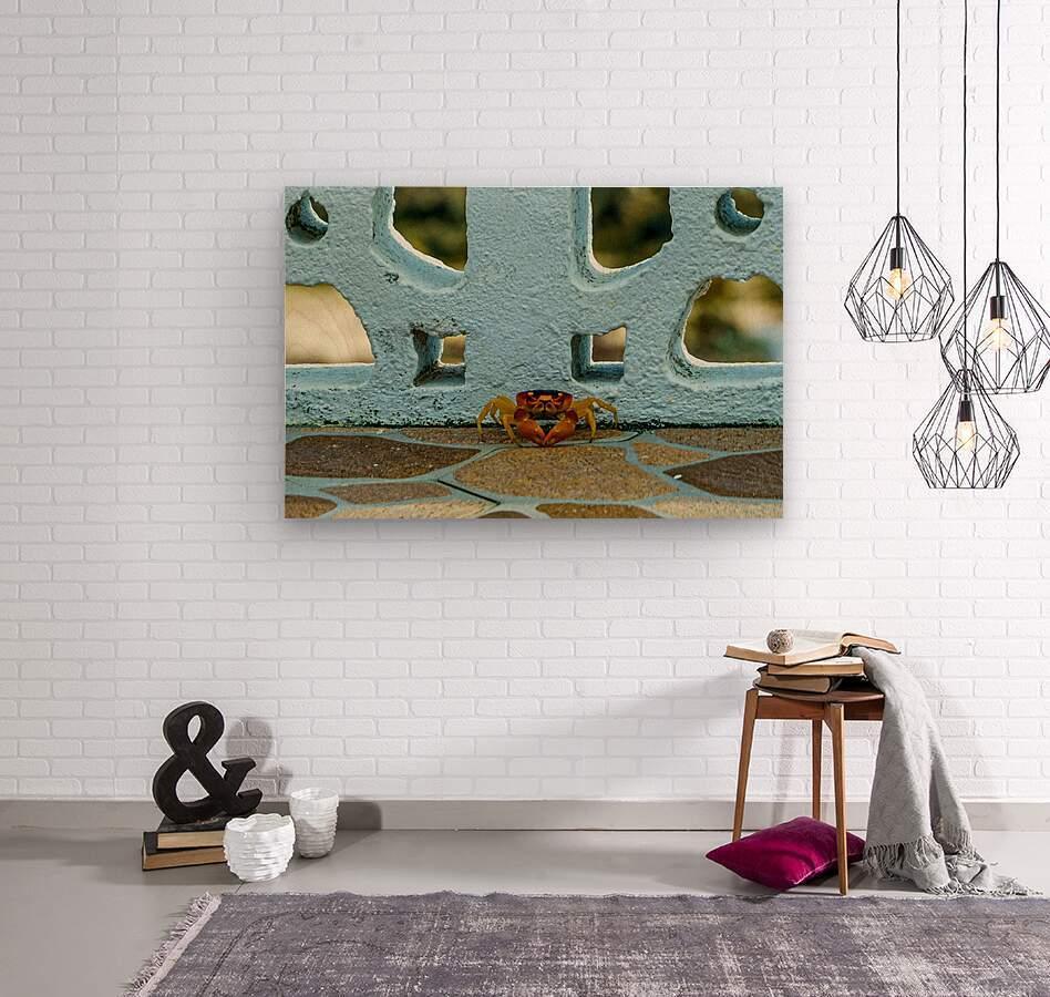 Cayman Crab  Wood print