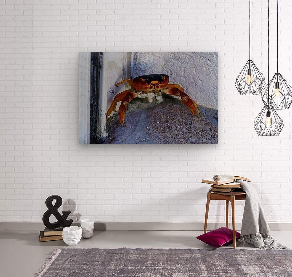 Cayman Cornered Crab  Wood print