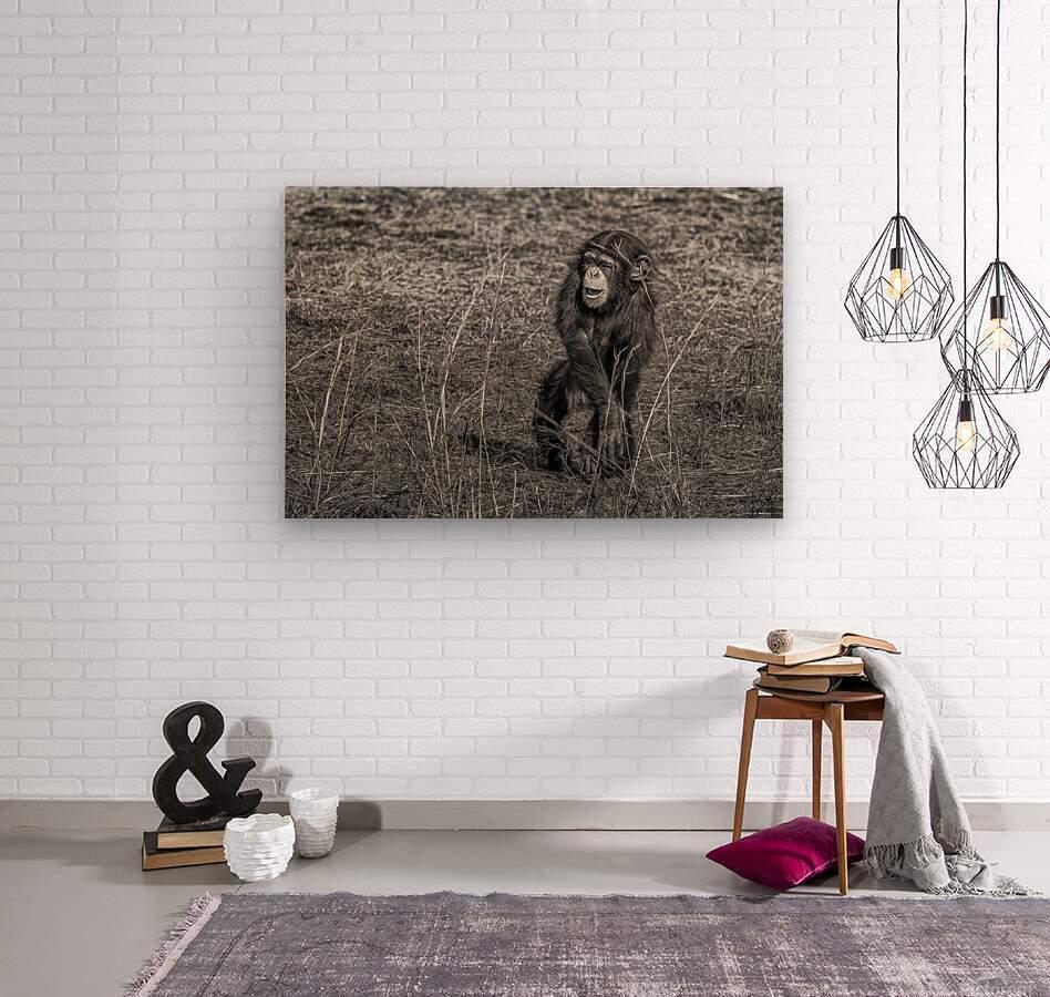 Baby Chimp 2  Wood print