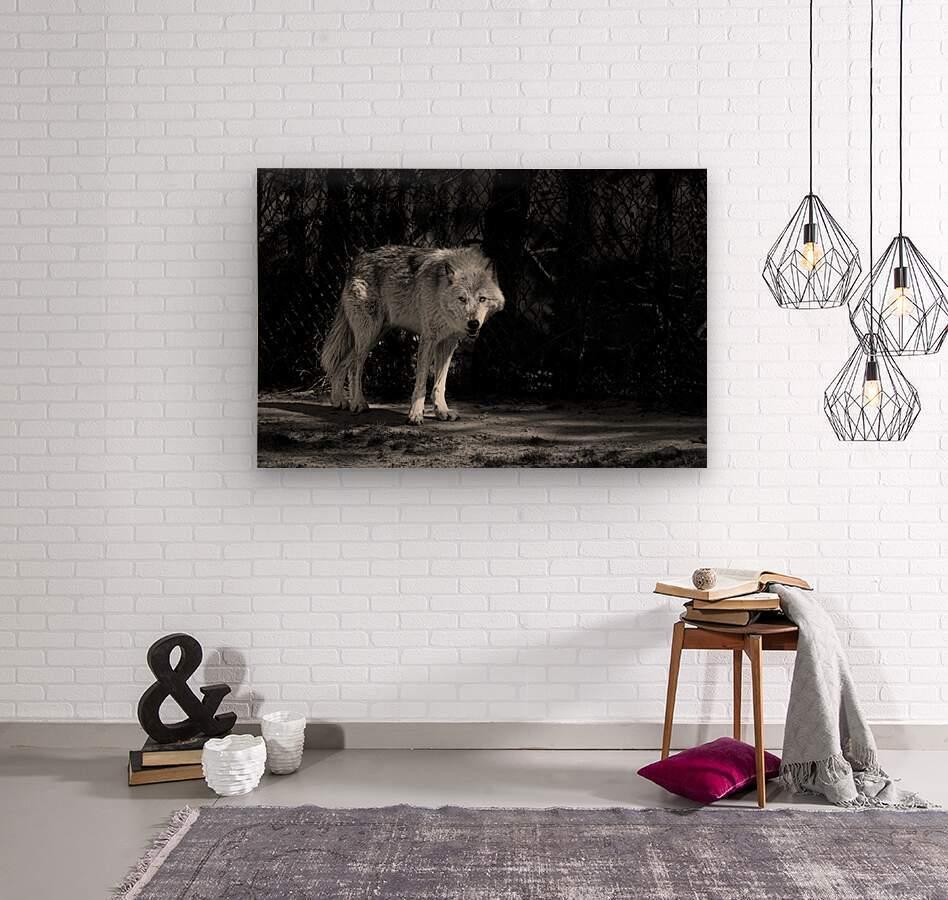 Wolf 1  Wood print