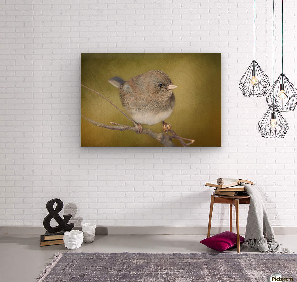 Dark Eyed Junco with Texture  Wood print