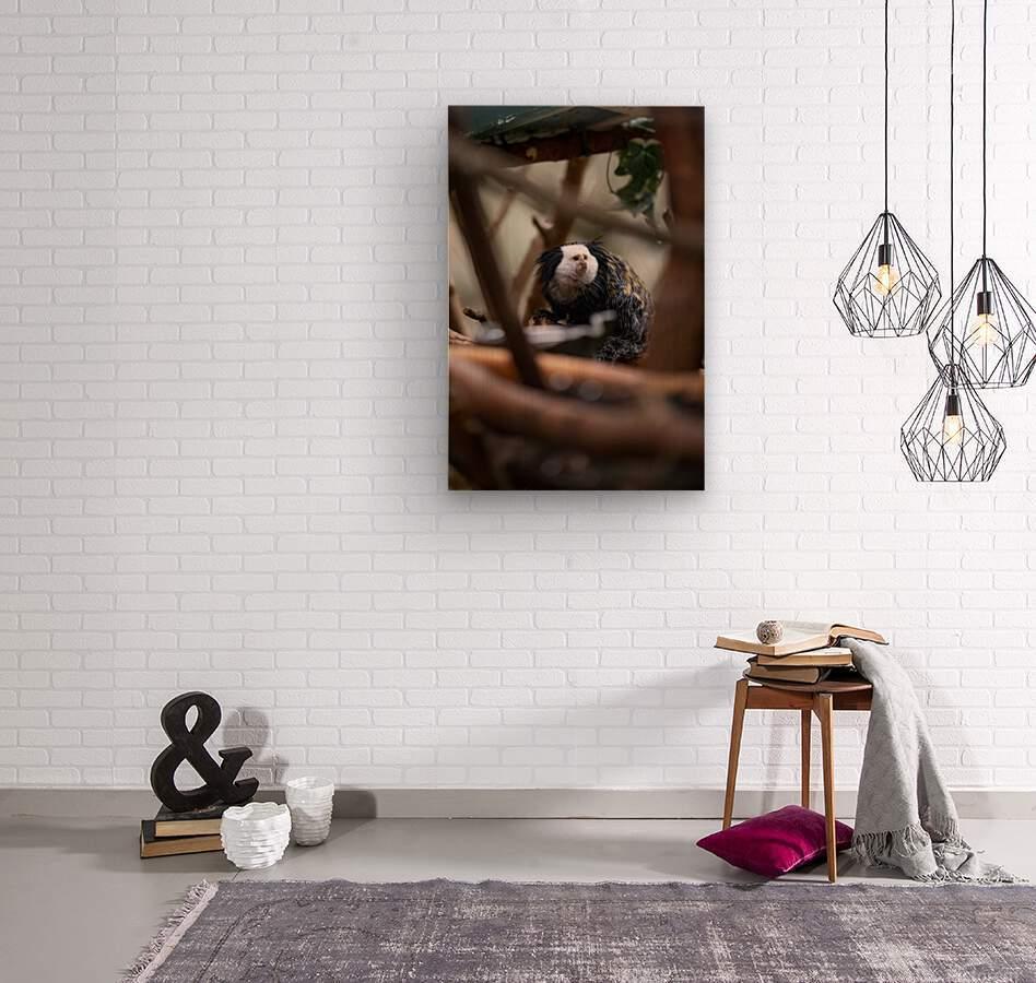 Through The Trees  Marmoset   Wood print