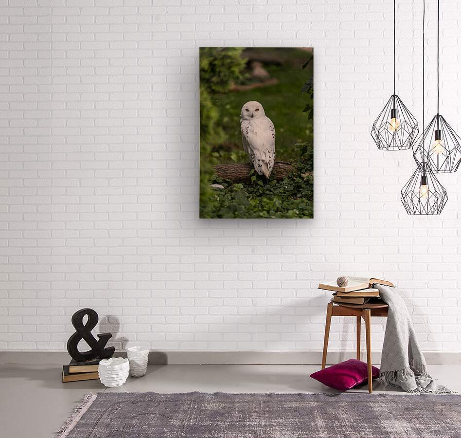 Yellow Eyes  Snow Owl   Wood print