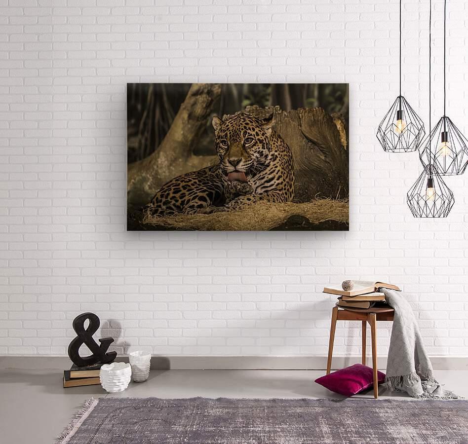 Morning Bath  Jaguar   Wood print