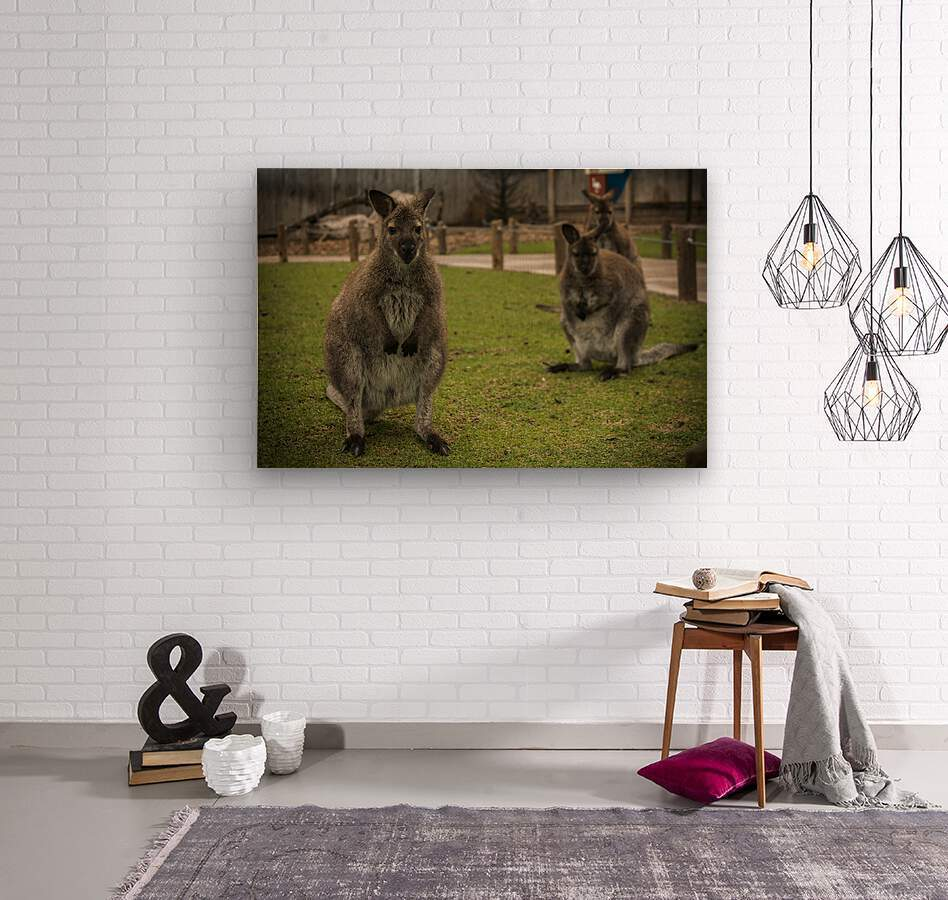 Intriguing   Wallaby   Wood print