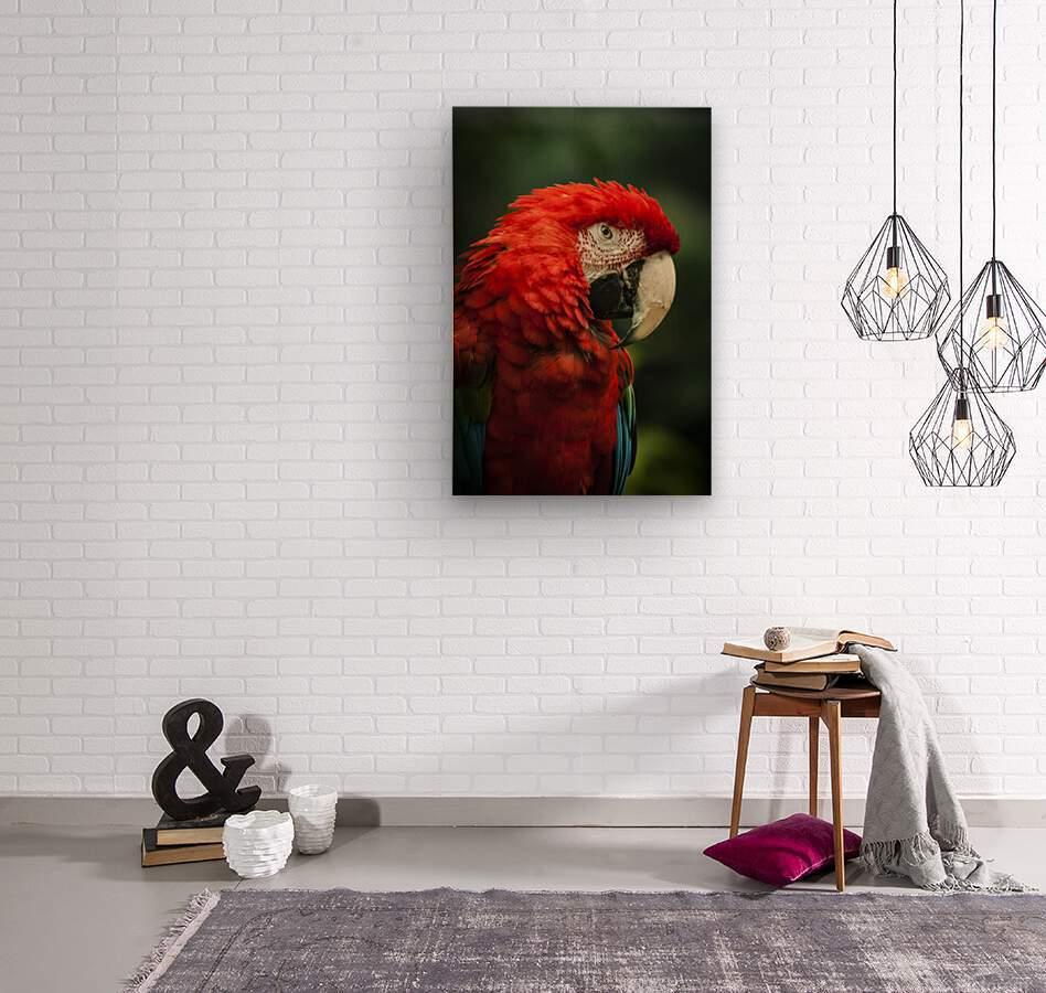 Parrot Portrait  Wood print