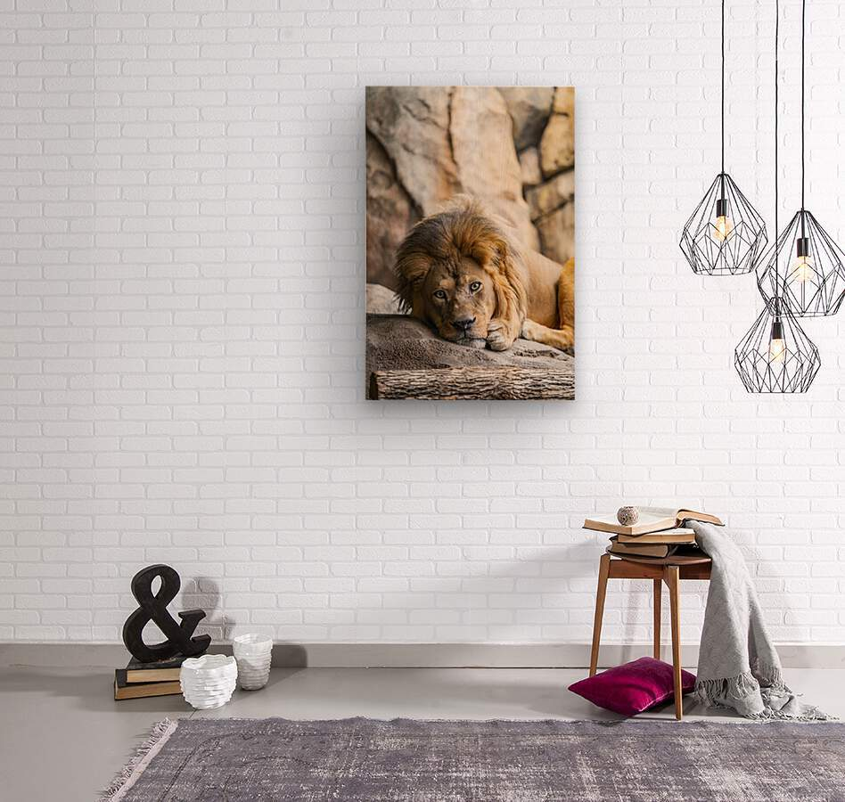 Connection  Lion   Wood print