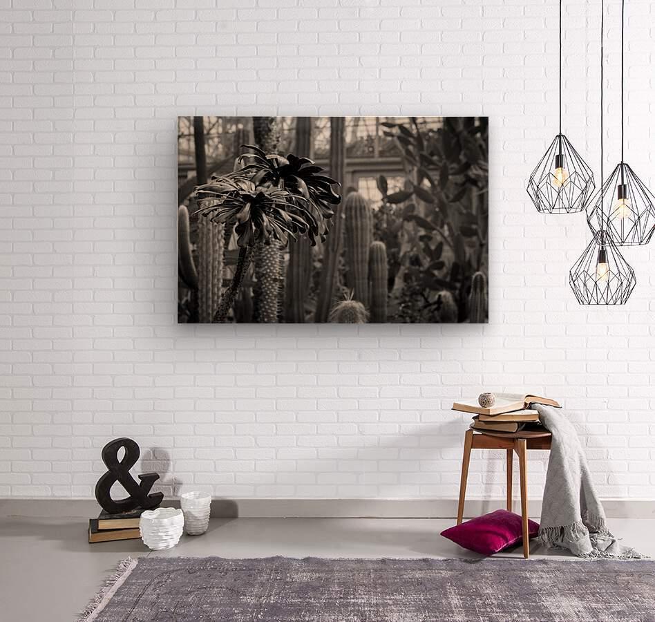Desert in Black White  Wood print