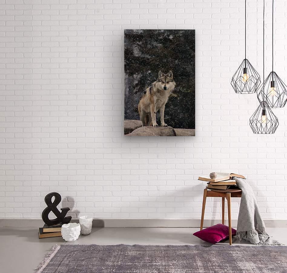 Cold Night Wolf  Wood print