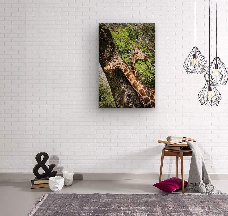 Spots Under Shadows  Giraffes   Wood print