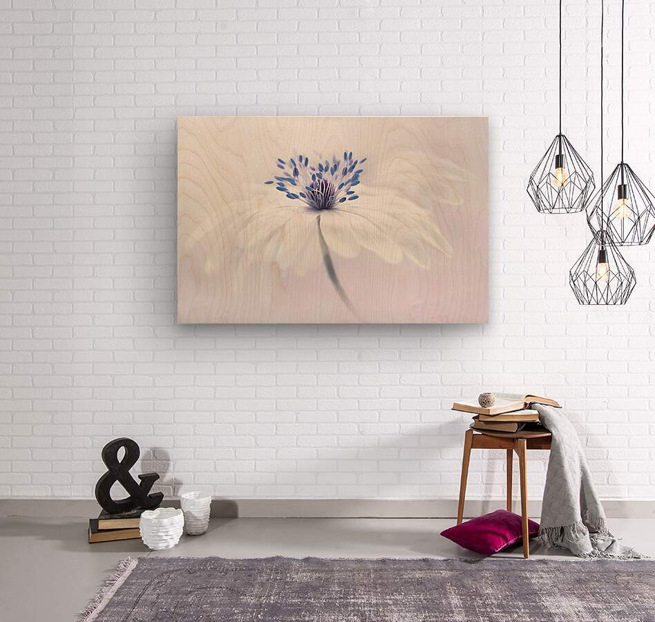 Anemone blanda  Wood print