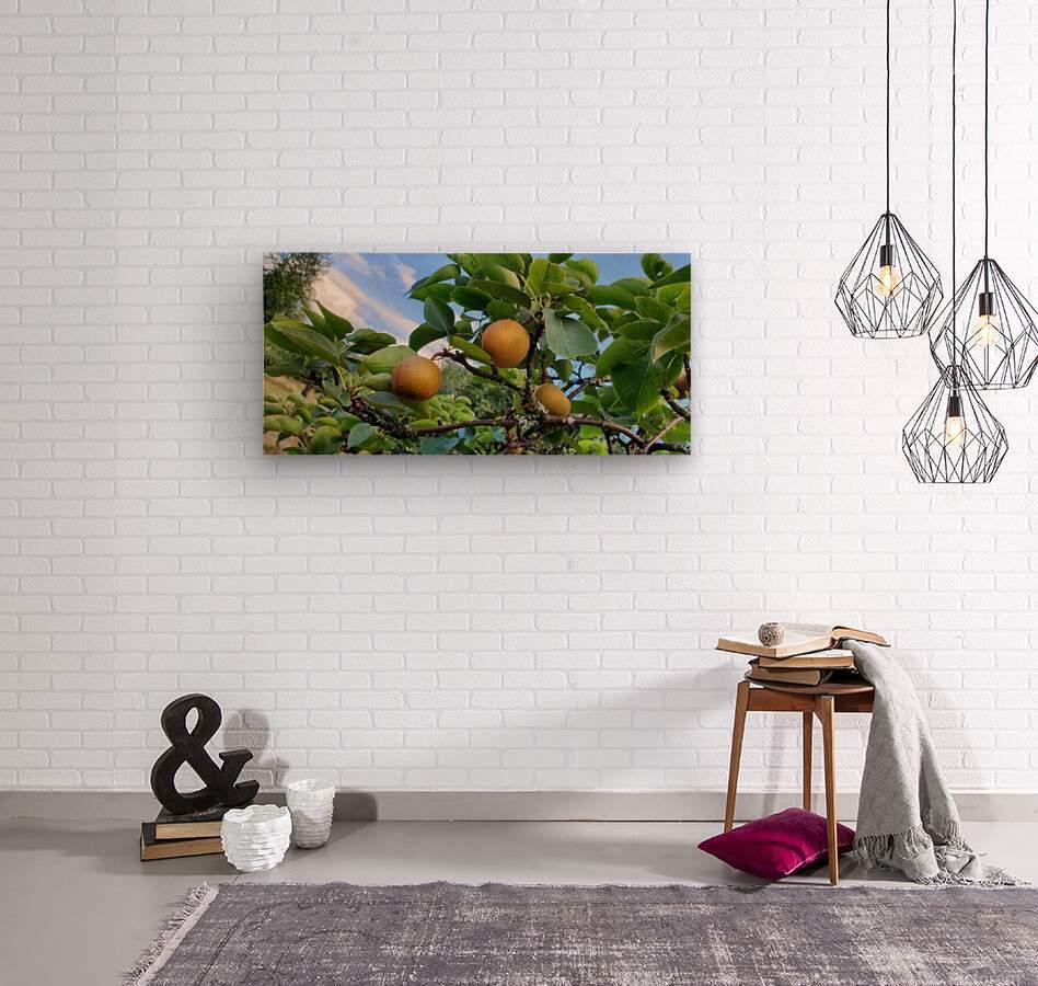 Asian Pears  Wood print