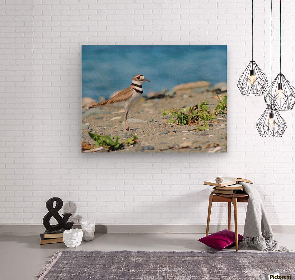 Killdeer on the Beach  Wood print