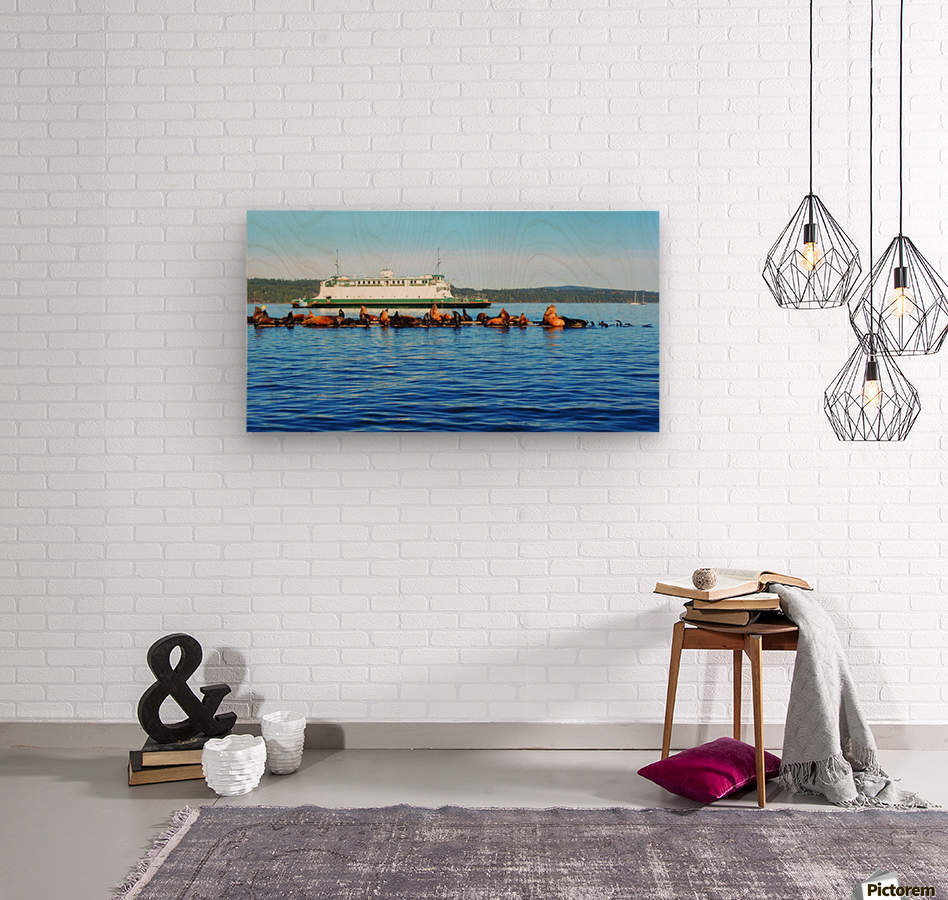 Sea Lions Hanging Out  Wood print