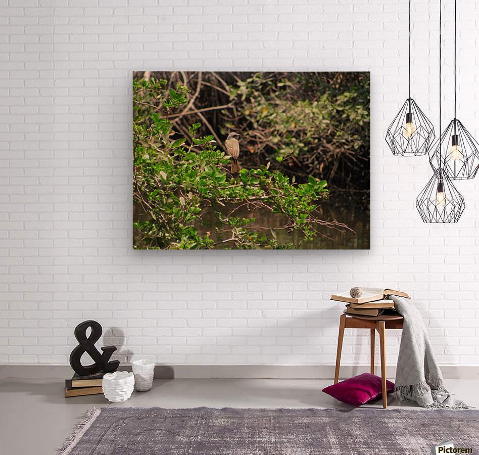 Tropical Bird in Tree  Wood print