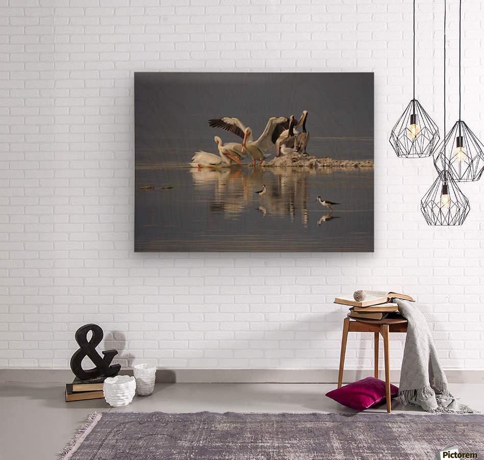 Pelican Reflections  Wood print