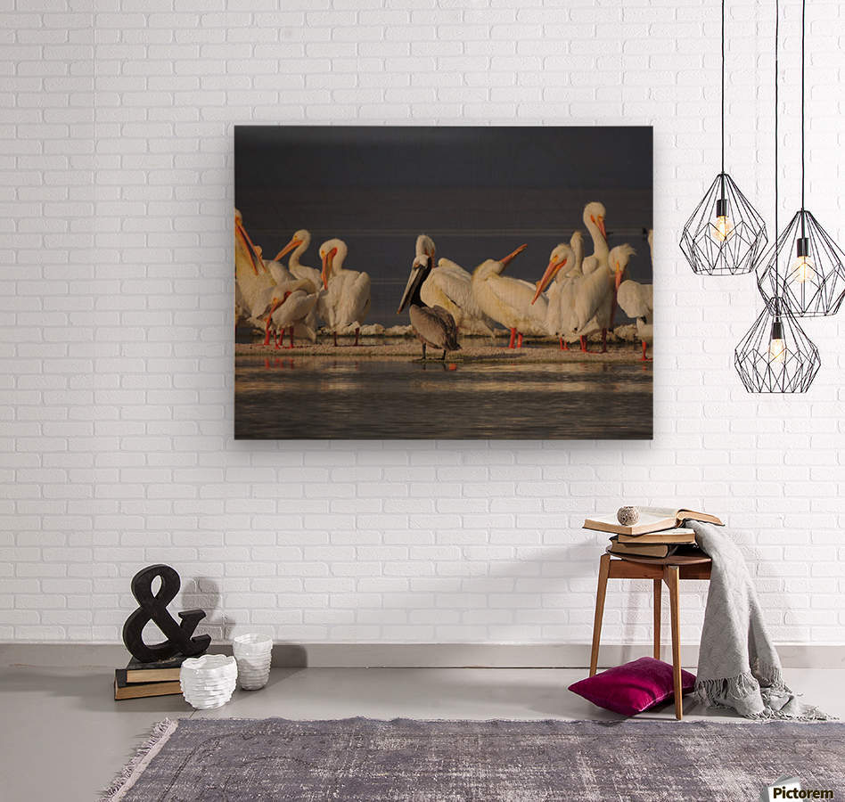 Pelicans at the Salton Sea  Wood print