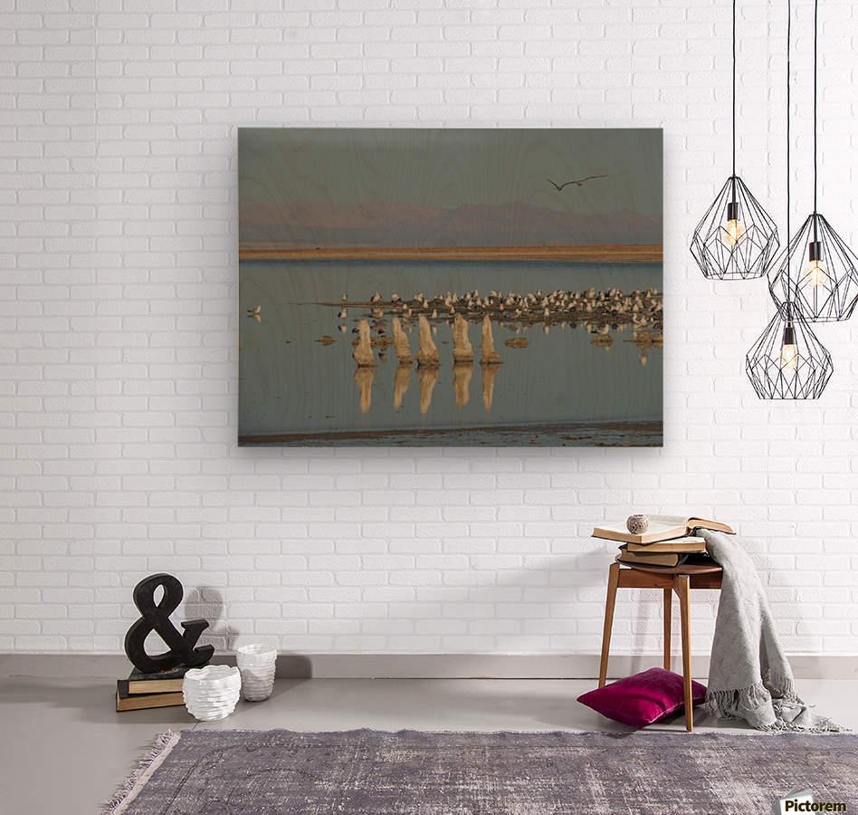 The Salton Sea  Wood print
