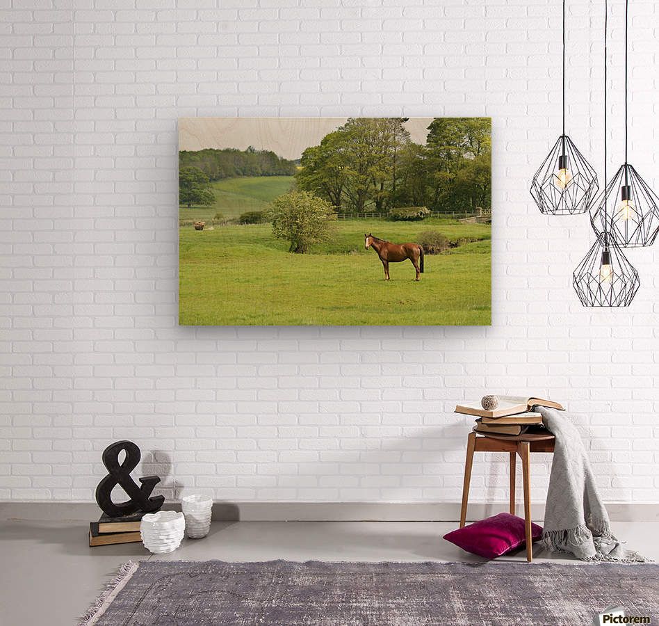 Horse in field; Morpeth, Northumberland, England  Wood print