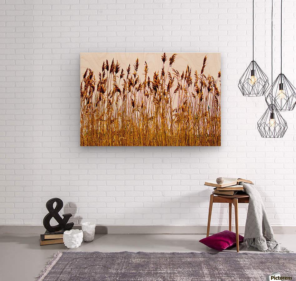 IMG_2852 2  Wood print