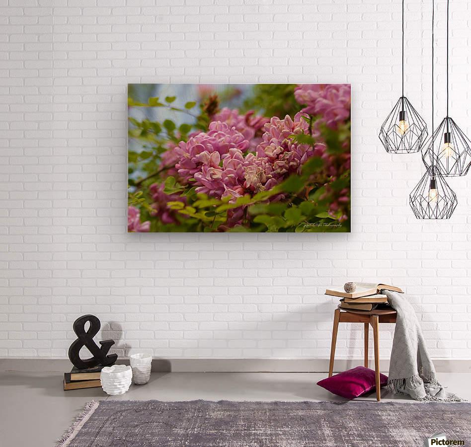 Rose Acacia   Wood print