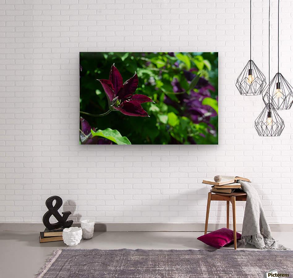 Divine Vine  Wood print