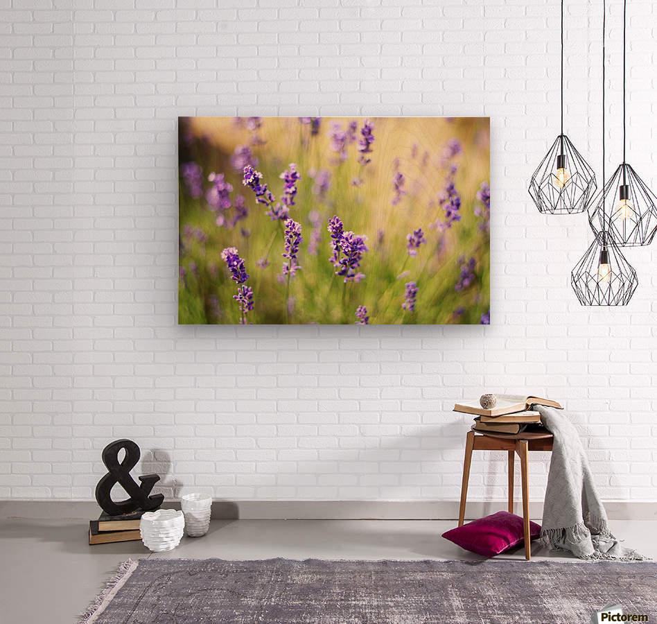 Lavender flowers  Wood print