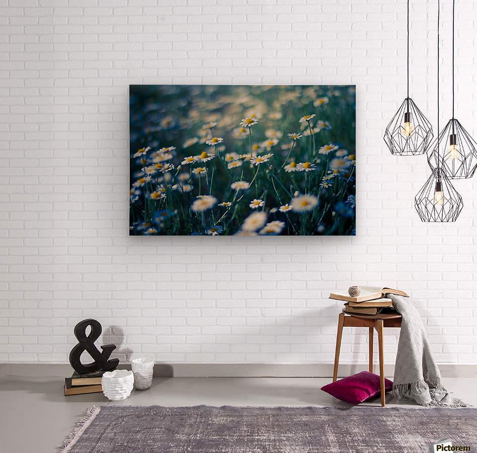 Summer, spring daisy field  Wood print