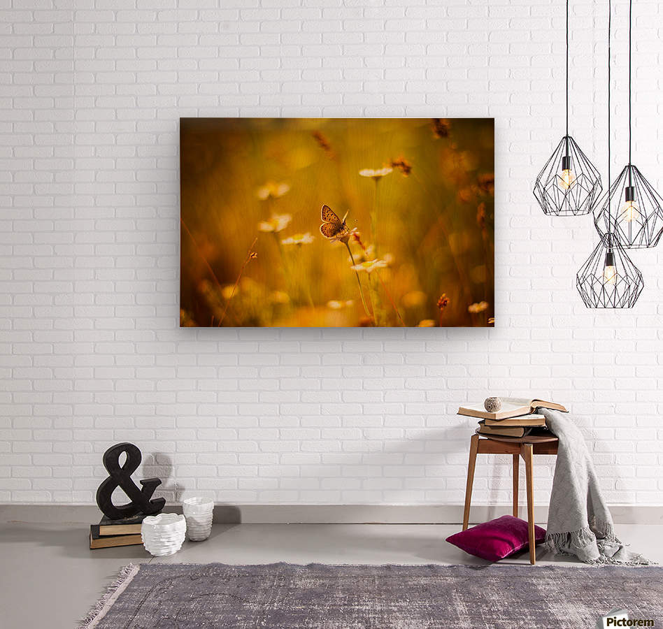 Golden sunset. Daisy and butterfly  Wood print
