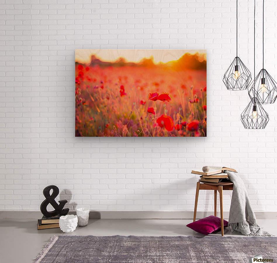 Beautiful Sunset poppy flowers  Wood print