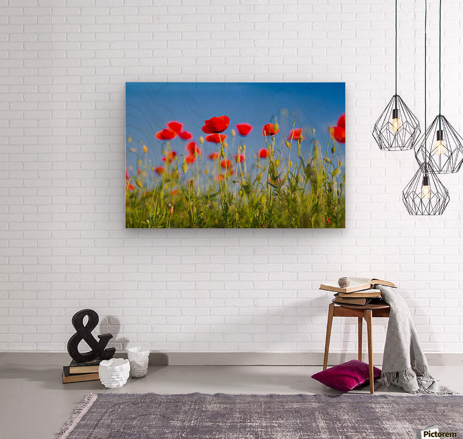 Beautiful Sunset poppy flowers  Wood print