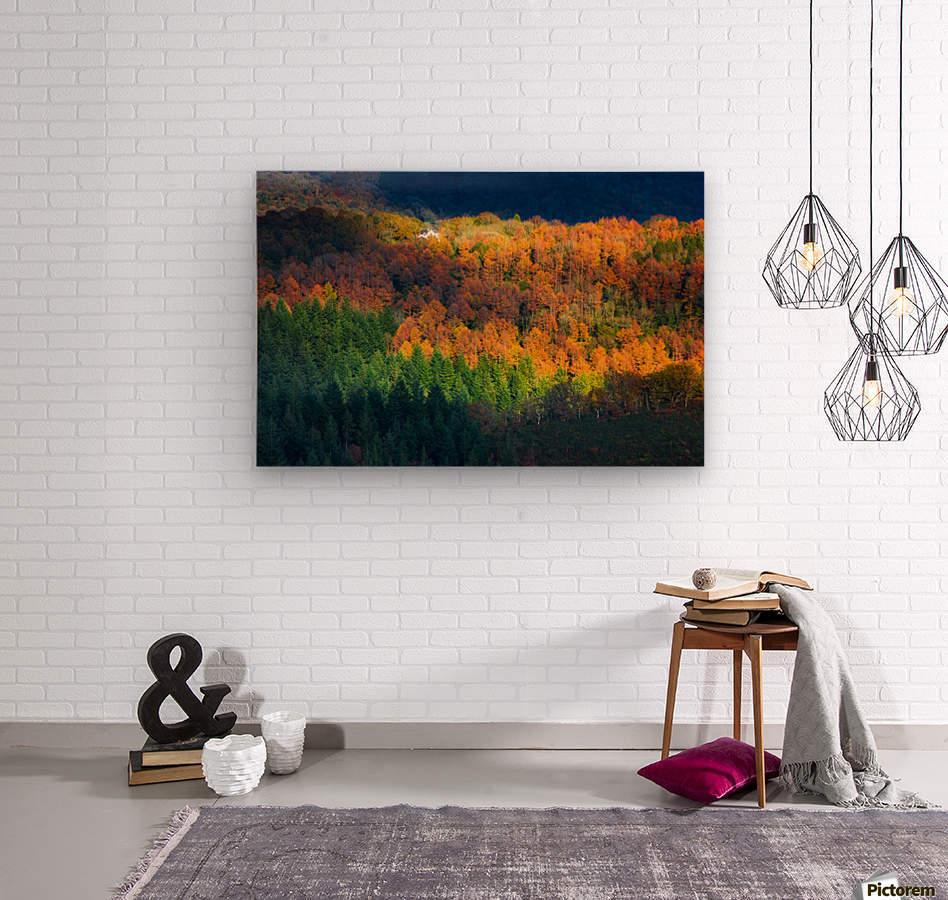 Amongst the trees  Wood print