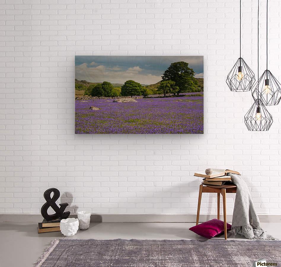 Emsworthy bluebells  Wood print