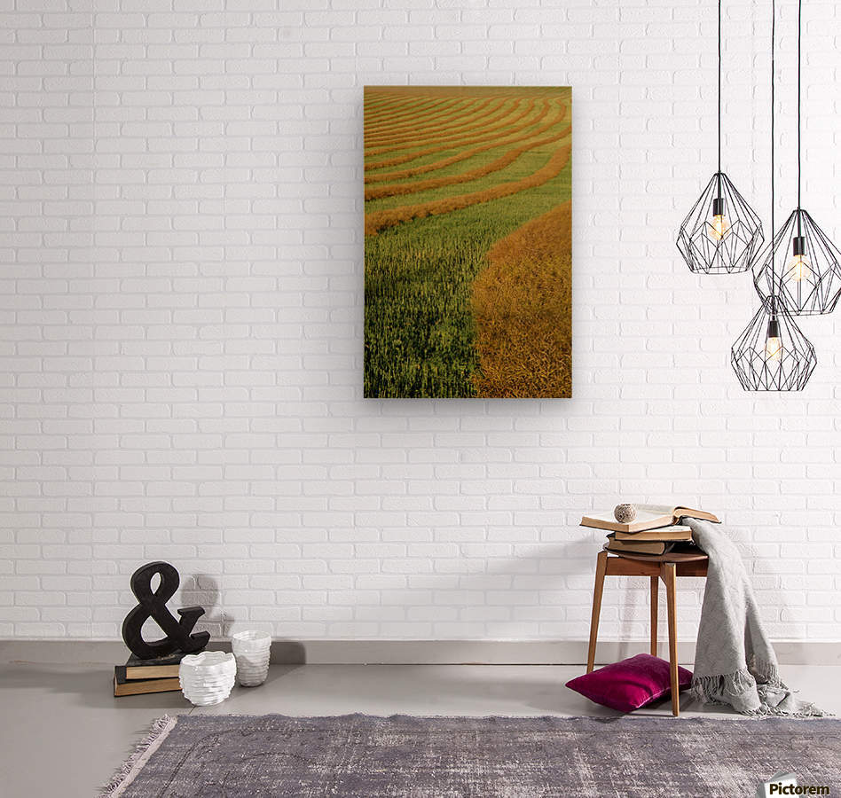 Rows Of Canola Windrows  Wood print