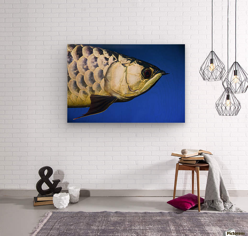 Closeup Of A Fish  Wood print